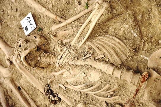 Kazdıkça acı çıktı İşte 108 yıllık Şehitler Tepesi