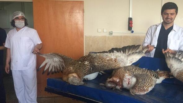 Avcılar Tarafından Vurulan Toy Kuşları YYÜ'de