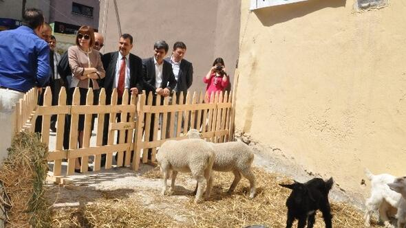 Balıkesir'de Süt Sokağı Açıldı