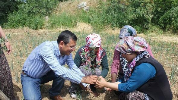 Yırca'da Zafer Ağaçları Dikildi