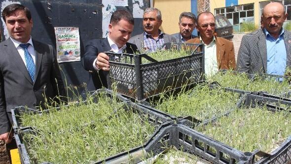 Hüyük'te Lavanta Bitkisi Üretimi Başlıyor