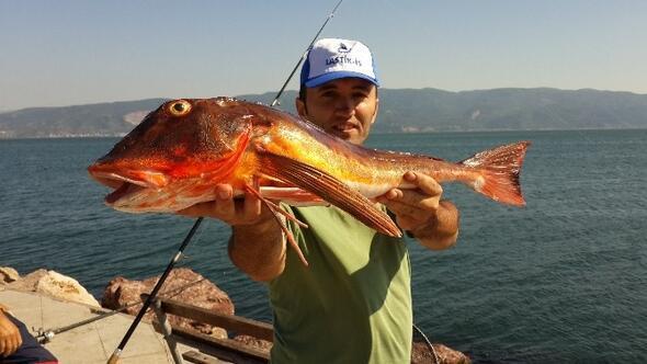 Körfez'de Olta Balıkçılığına İlgi Artıyor