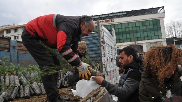 Yalova'da Yılbaşında Vatandaşlara Fıstık Çamı Dağıtıldı