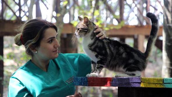Kedi Kasabasına evcil kedilerini de getirmek istiyorlar
