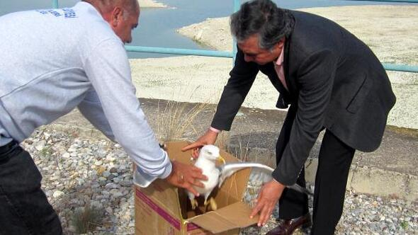 Tedavisi yapılan hayvanlar doğal ortamlarına salındı