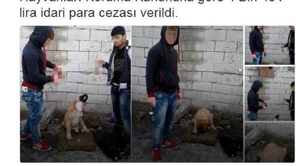 Kulakları kesilmiş köpek fotoğrafları isyan ettirdi (3)