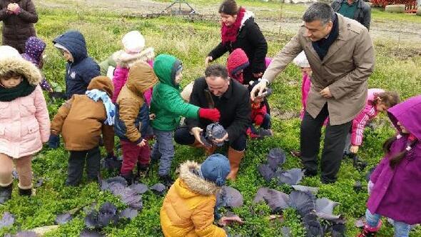 Ana okulu öğrencileri sebze tarlasına götürüldü