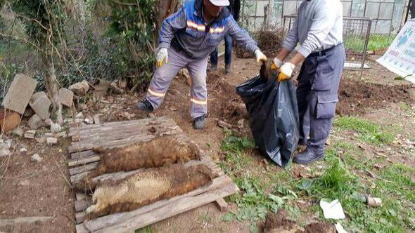 Kedi köyündeki ölümler hayvanseverleri karşı karşıya getirdi