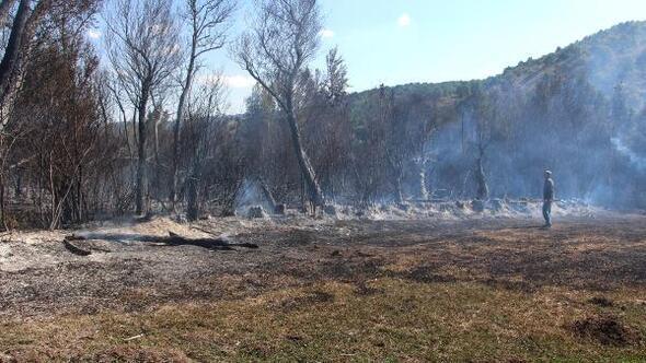 Sivasta orman yangını