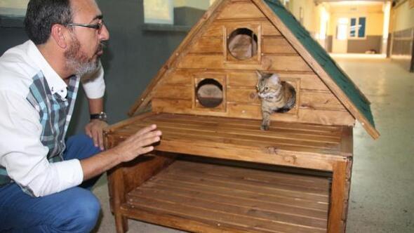 Bu evlerde kediler oturacak