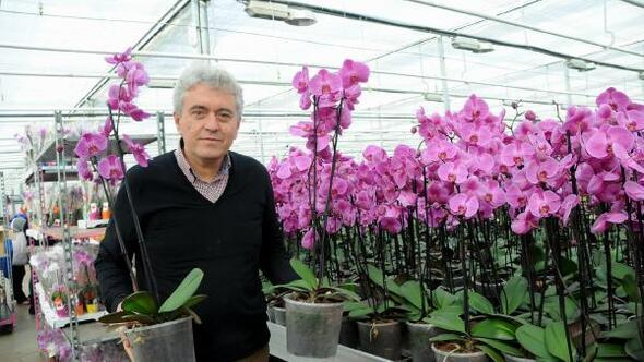 Yalovada Sevgililer Günü için gül yerine orkide