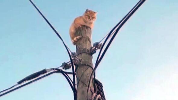 Köpek korkusu direğe tırmandırdı