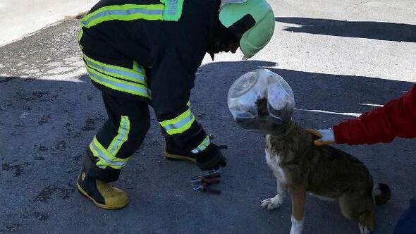 Kafası bidona sıkışan köpek, itfaiye ekibinin binasına girdi
