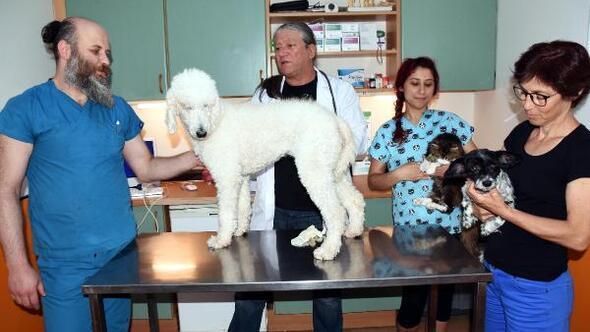 Bodrumda her gün bir veteriner nöbetçi olacak