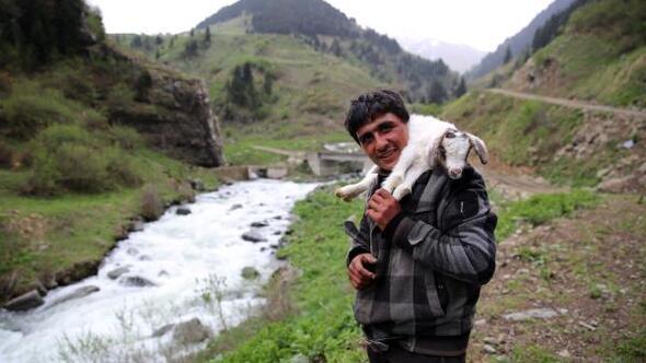 Rizeye ithal çoban