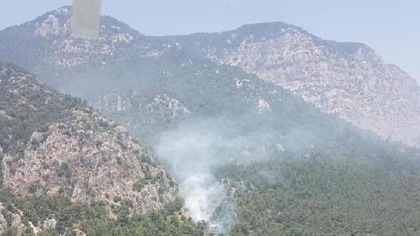Ulada orman yangını