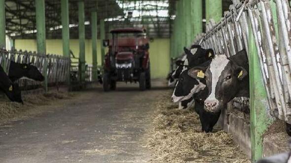 FAO Gıda Fiyat Endeksi Mayıs'ta süt ürünlerinin etkisiyle yükseldi