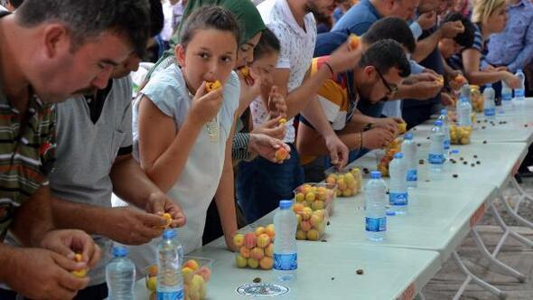Mutta Kayısı Festivali