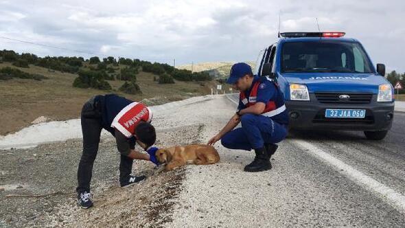 Jandarmanın fark ettiği yaralı köpek tedaviye alındı