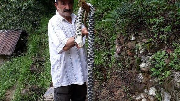 Bahçesinde gördüğü 2 metrelik endemik tür yılanı, sopayla öldürdü