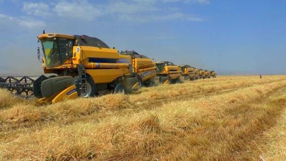 Muşta buğday bereketi