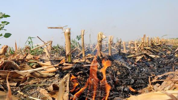 Adana Haberleri - 'Anız yakmak, tarımsal üretime zarar veriyor' - Merkez  Haberleri