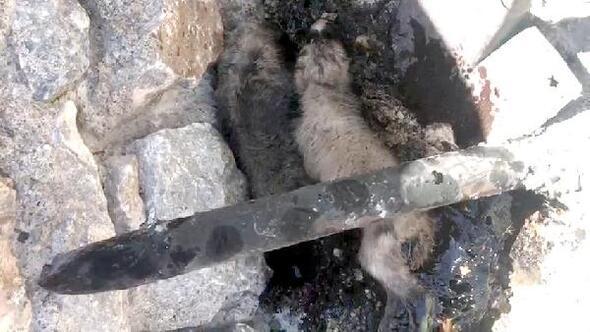 Zifte yapışan yavru köpekleri itfaiye kurtardı
