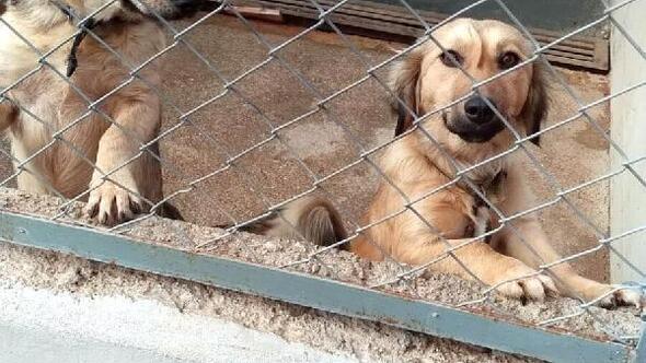 SEHAYDER: Barınaklar terk edilen cins köpeklerle doldu