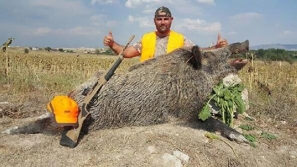 Çiftçilerin ürünlerini yiyen 250 kiloluk yaban domuzu avlandı