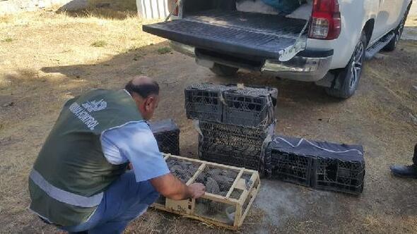 Vanda kınalı keklik avcılarına 18 bin lira ceza