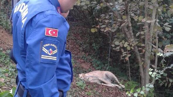 Köpeği, tavuklarını yediği için ağaca iple asıp öldürdü