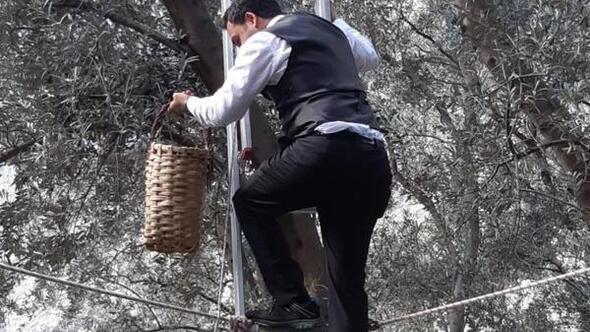 Yusufelinde zeytin hasadı başladı