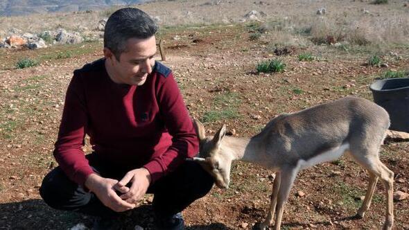 Suriye sınırındaki gazella gazellalar artıyor
