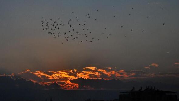 Küçük kargaların gün batımı uçuşu