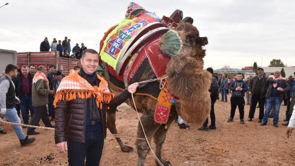 Çanda develere havut giydirildi