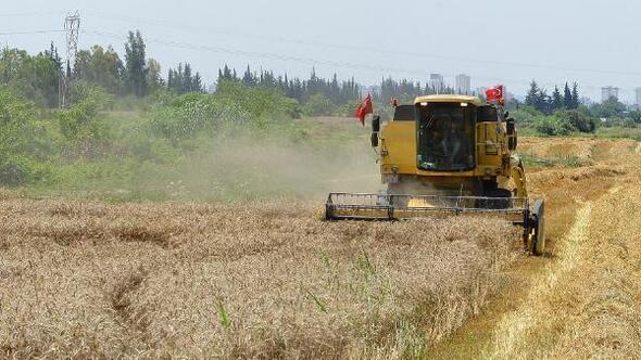 İncefikir: Buğday ekim alanları hızla azalıyor