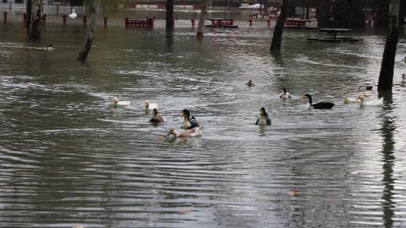 Su kaynağı taştı, kuğu ve ördekler mesire alanında yüzdü