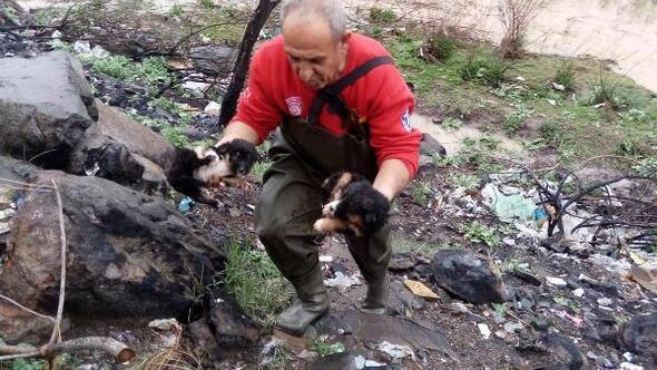 Boğulma tehlikesi geçiren köpekleri itfaiye kurtardı