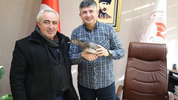 Köy muhtarı, bitkin halde bulduğu ördeği Doğa Koruma ekiplerine teslim etti