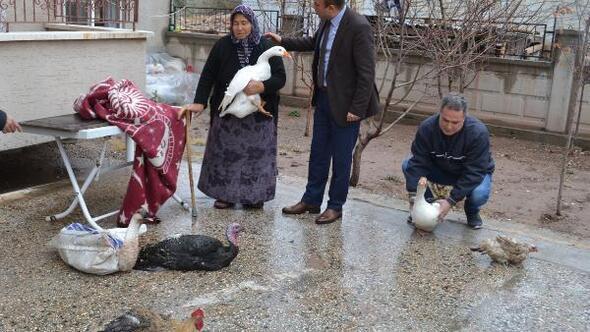 Hindileri çalınan kadına, kanatlı hayvan hediye ettiler