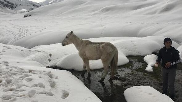 Karda mahsur kalan at, 5 saatte kurtarıldı