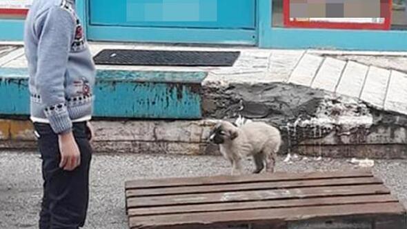 Şemsiyesiyle sokak köpeğini yağmurdan korudu