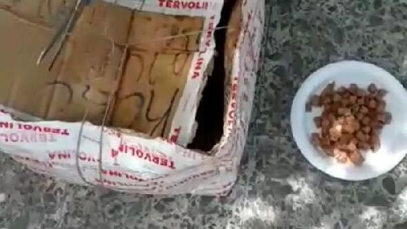 Kedi ve yavruları, ağzı telle bağlı kolide ölüme terk edildi