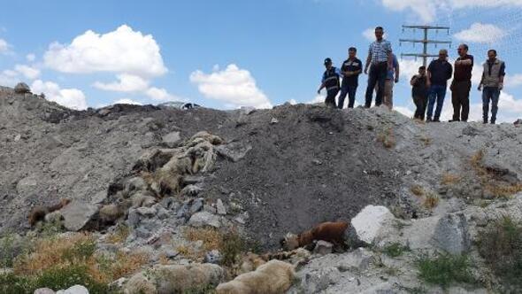 Konyada, arazide bulunan 15 köpek ölüsüyle ilgili suç duyurusu