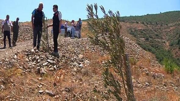 Hatay'da yanan araziler gelir getirici tür ağaçlar ile hayat buluyor
