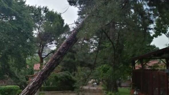 Amasyada şiddetli rüzgar ağaçları devirdi, araçlara hasar verdi