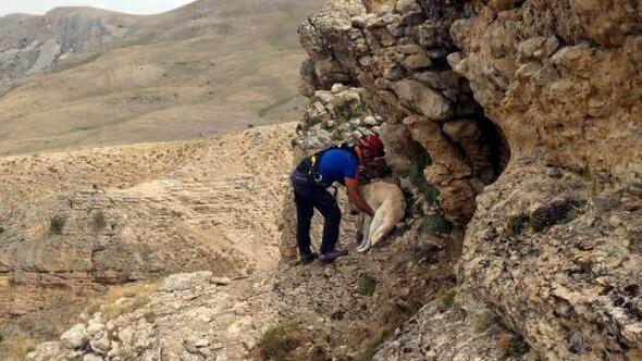 Kayalıklarda mahsur kalan köpeği AFAD ekibi kurtardı