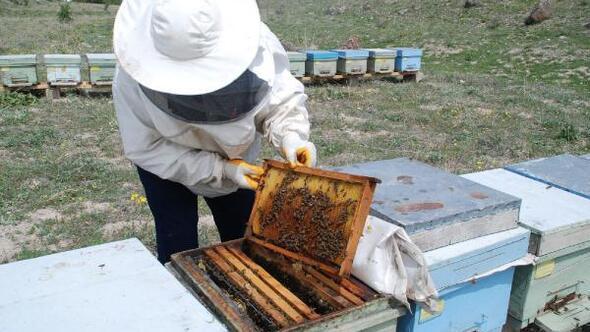 Arıcılar bal rekoltesinden umutlu