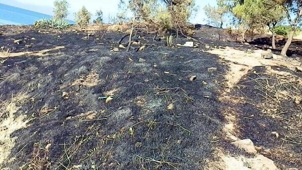 Foçada 1 hektar makilik alan yandı