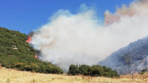 Afyonkarahisarda orman yangını